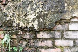 Plíseň na zdi a jak se jí zbavit jednou provždy